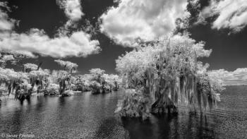 Among the Cypress Trees