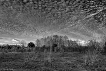 Florida Woods