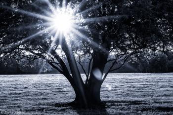 Inner Light II