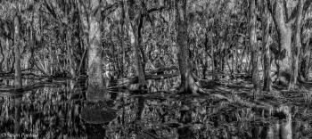 Myakka's Flooded Forest