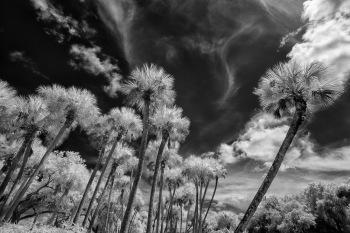 Palms-Up