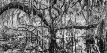 The Tree Hugger