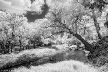 Creekside Dreams