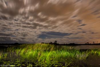 Night at the Savannas