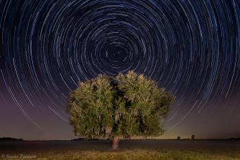 Star Trails Over Live Oak