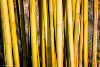 Bamboo Abstract II