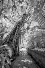Jungle in Infrared