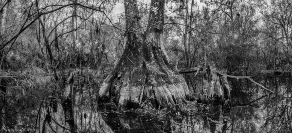 Hidden Cypress