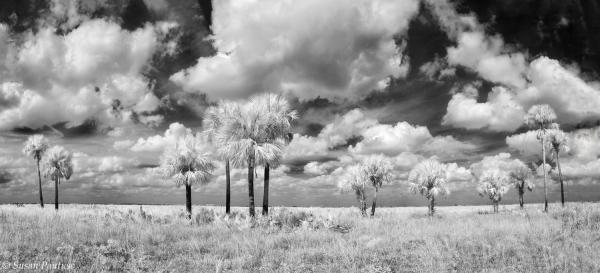 Peaceful Prairie by Susan Pantuso