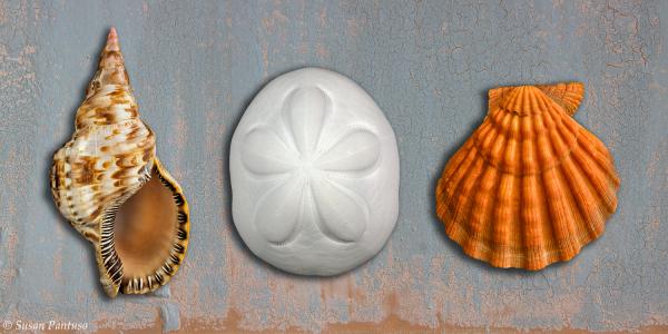 Seashell Panorama