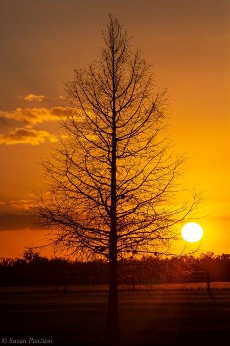 Lone Cypress Sunset