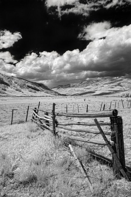 The Old Rugged Fence